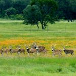 Selah Bamberger Ranch Preserve
